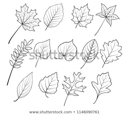 set of watercolor colorful autumn leaves stock photo © balasoiu