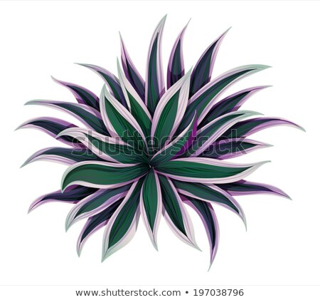 A topview of a variegated moses Stock photo © bluering