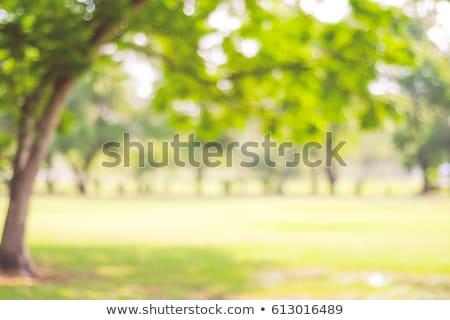 Park vektör görüntü doğa manzara gökyüzü Stok fotoğraf © Lukas101