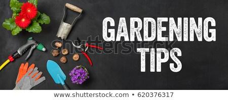 Garden tools on a dark background - Gardening tips Stock photo © Zerbor