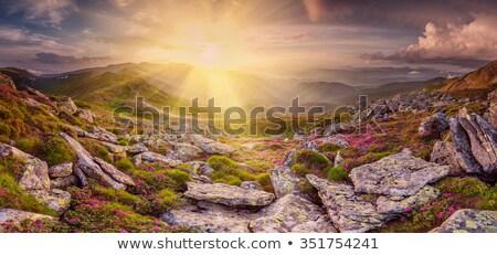 Stok fotoğraf: Yaz · manzara · dağ · çiçekler · gökkuşağı