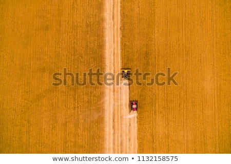 Top view of harvested barley wheat cereal grains Stock photo © stevanovicigor