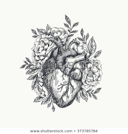 Stockfoto: Tekening · menselijke · hart · bloemen · vector · bloem