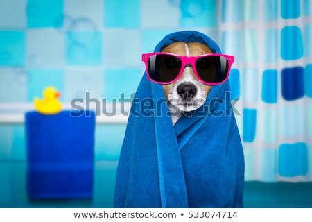 funny animals with a shower in the bathroom stock photo © aminmario11