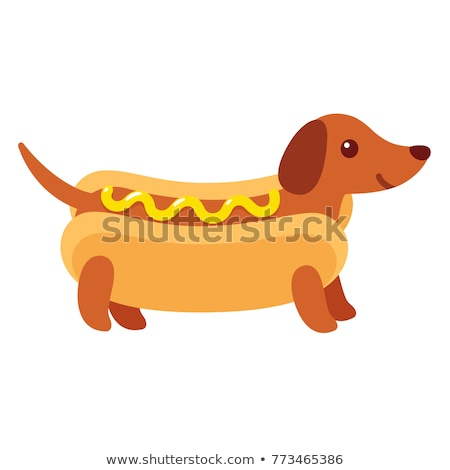 Hot dog teckel animal animaux chien Photo stock © MaryValery