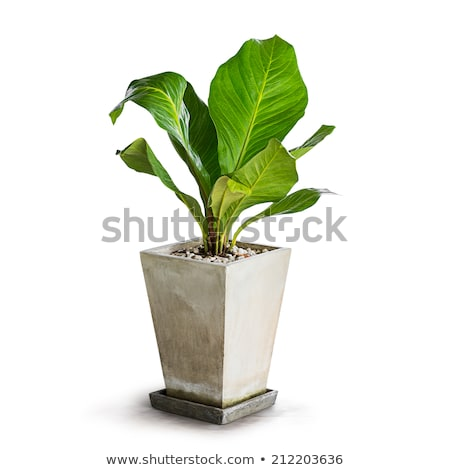 Stock photo: Ornamental Pots