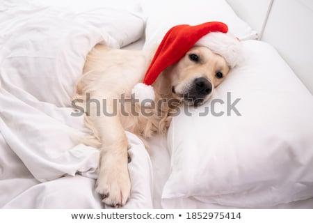kutyakölyök · mikulás · angol · bulldog · visel · jelmez - stock fotó © feedough
