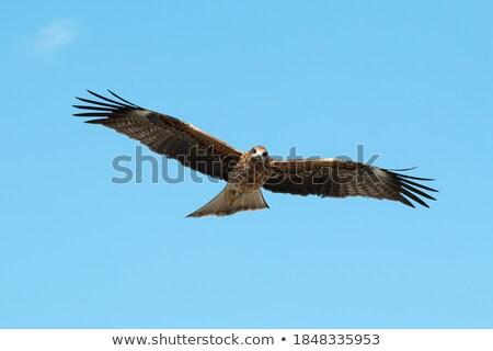 vôo · cauda · África · asas · blue · sky - foto stock © thp
