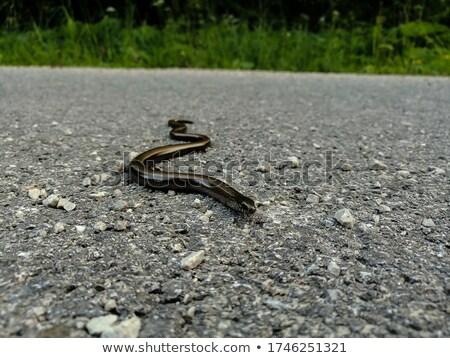serpente · padrão · preto · e · branco · estilo · moda · abstrato - foto stock © taviphoto