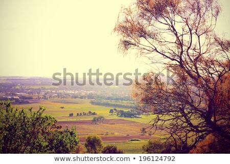 Vintage vina vides valle enfoque Foto stock © kwest