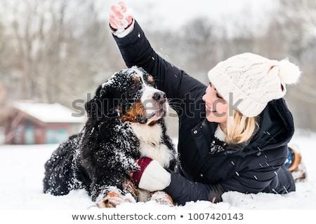 özenli · köpek · açık · havada · kar · renk - stok fotoğraf © kzenon