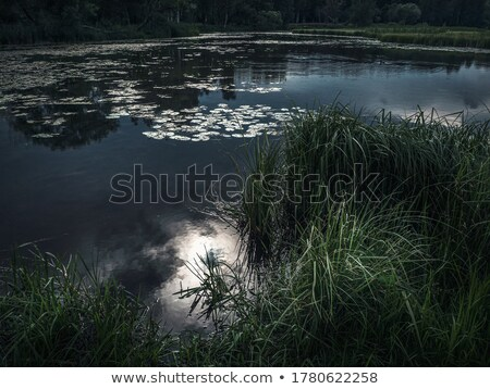 пруд · сцена · иллюстрация · небе · облака · природы - Сток-фото © colematt
