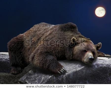 ビッグ ヒグマ 満月 1泊 実例 森林 ストックフォト © colematt