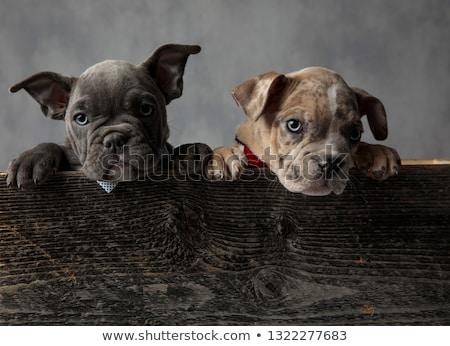 犬 · ボックス · 動物 · 待って - ストックフォト © feedough