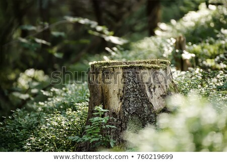 Beauty of Scandinavian nature, Norway Stock photo © Kotenko
