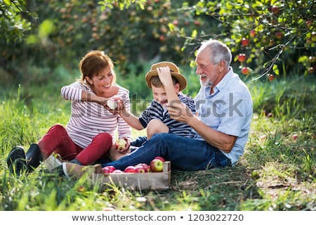 Senior couple of woman and man eating apples fresh from the tree Stock photo © Kzenon
