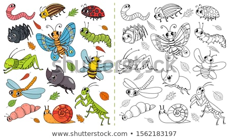 Kleurrijk kever speelgoed vergadering hand kind Stockfoto © lichtmeister