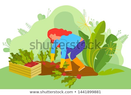 Vrouw oogst plantage planten werken veld Stockfoto © robuart