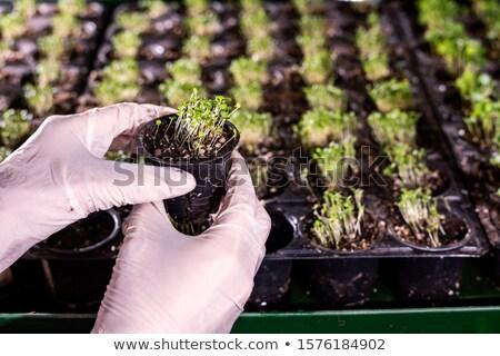 Ręce szklarnia pracownika mały puli Zdjęcia stock © pressmaster