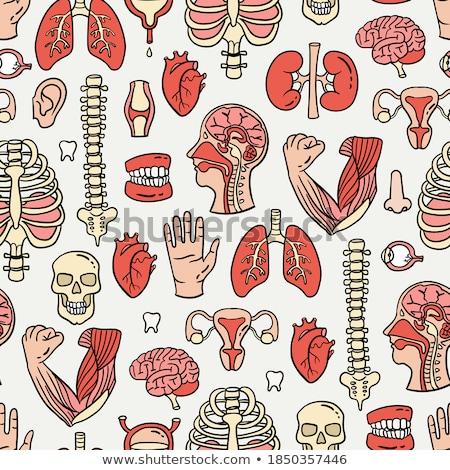 Umani organo corpo cartoon doodle Foto d'archivio © foxbiz