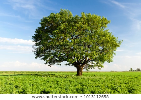 céu · árvores · foto · brilhante · blue · sky · branco - foto stock © pressmaster