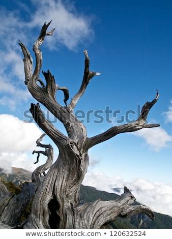 Magas szélességi fok kidőlt fa kék ég napos idő fa Stock fotó © Zhukow