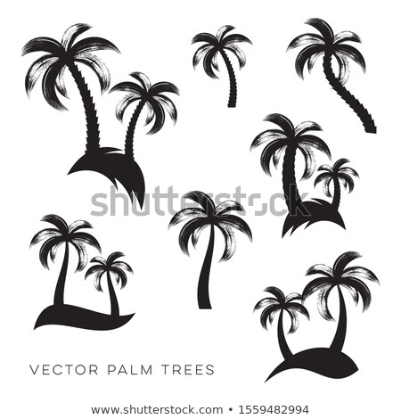 Vector palmeras colección cepillo diseno colorido Foto stock © blumer1979
