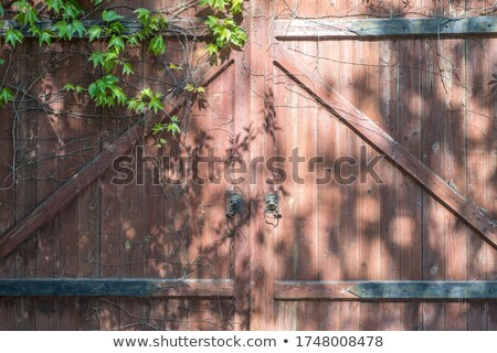 The blank wall of old building with wild vine stock photo © Traven