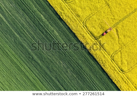 Violación campo cielo granja hermosa cielo azul Foto stock © romvo