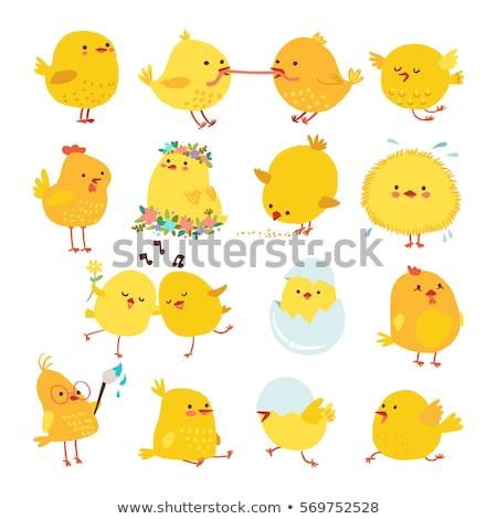 tiny easter chicken stock photo © benchart