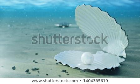 真珠 シェル 黒 ビーチ 海 背景 ストックフォト © tepic