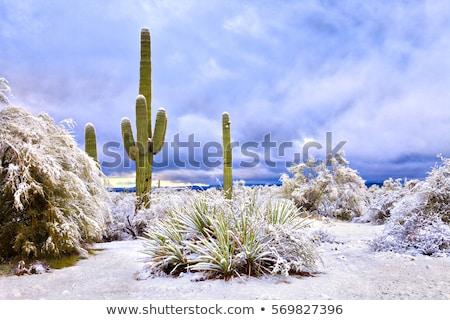 雪 砂漠 風景 自然 光 ストックフォト © Leonardi