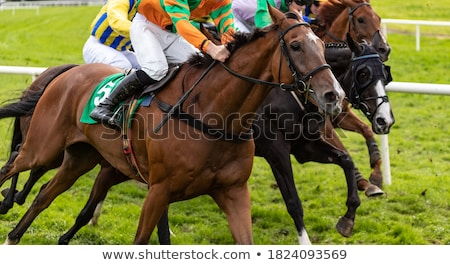Thoroughbred racing Stock photo © SKVORTSOVA