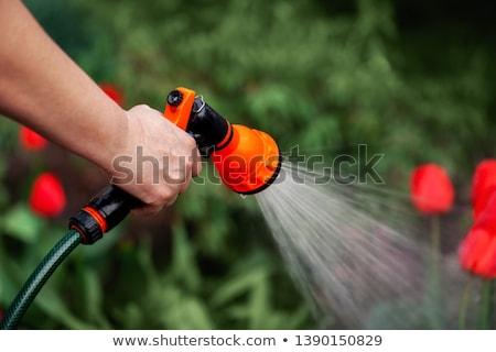vermelho · groselha · folha · orvalho · lata · usado - foto stock © zhukow