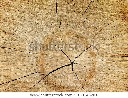 Spleet hout spiraal abstract stijl textuur Stockfoto © homydesign