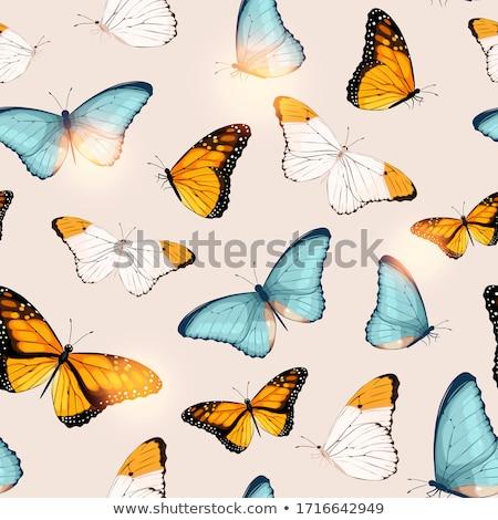 Kleurrijk tropische vlinders vectoren poster textuur Stockfoto © krabata