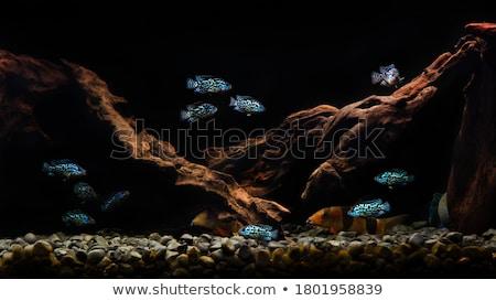 profundo · mar · pescador · peixe · água · escolas - foto stock © cteconsulting