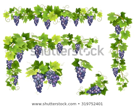 Grape cluster with leaves Stock photo © Masha