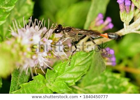 vespa · piccolo · fiore · africa - foto d'archivio © goce