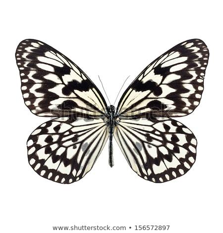 黒白 蝶 葉 立って ツリー ストックフォト © rhamm