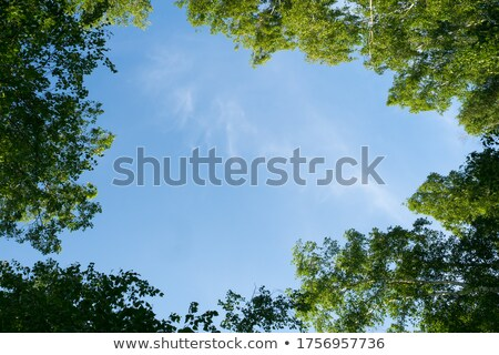 Stock photo: Look up to the sky through leaves and trees