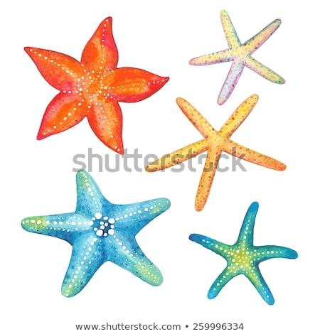 Marine life with tropical fish and seashell, vector illustration Stock photo © carodi
