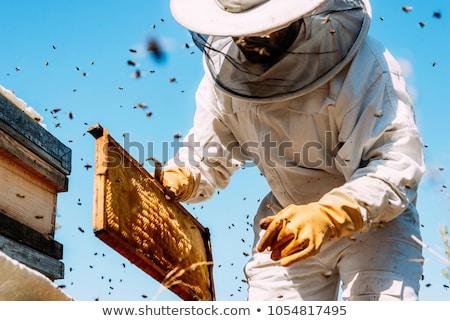 Petek odak doğa erkekler arı tarım Stok fotoğraf © emirkoo