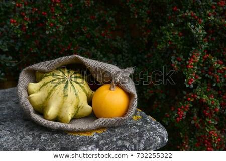 Foto stock: Abóbora · pedra · banco · maduro · monocromático