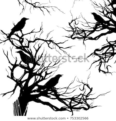 黒 ツリー 孤独 背景 鳥 羽毛 ストックフォト © jagoda