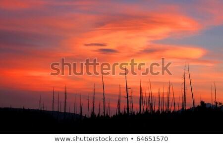 Brillante naranja incendios forestales nubes parque Wyoming Foto stock © emattil