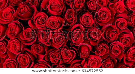 Red rose background texture Stock photo © njnightsky