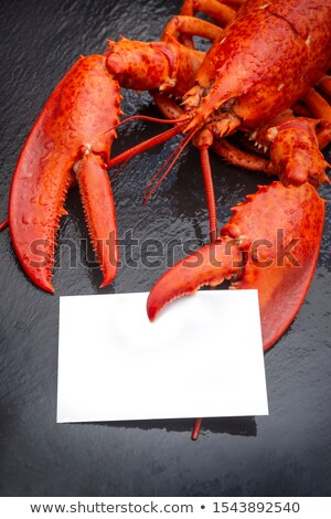 Lobster Blank Sign Stock photo © Lightsource
