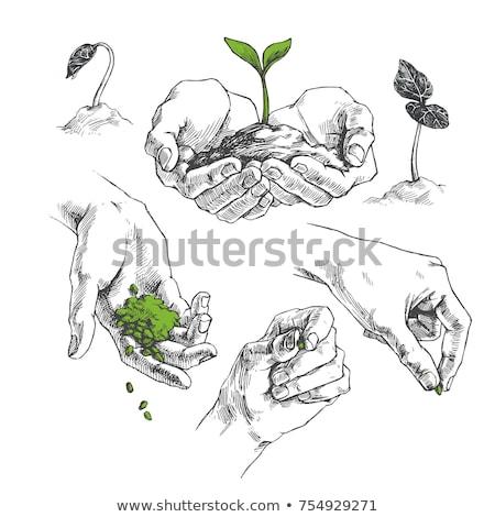 tarım · logo · ağaç · yaprak · vektör · logo · tasarımı - stok fotoğraf © blaskorizov