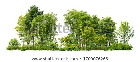 Fák bokrok zöld izolált fehér égbolt Stock fotó © scenery1